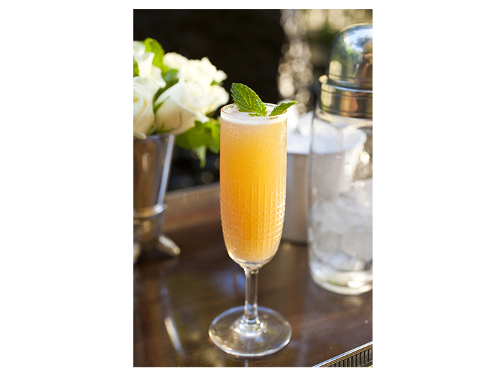 Mimosa d'Appolinaire